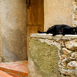 Black kitty in Tautavel, France
