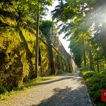 Walking through the forest in Sintra, Portugal