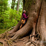Tree hugging at Cathedral Grove in Vancouver Island, BC (Canada)