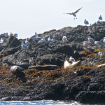 Birds & sea lions  For the story, check out my post:  Whale Watching in Tofino