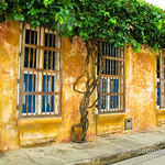 Tree Windows in Cartagena